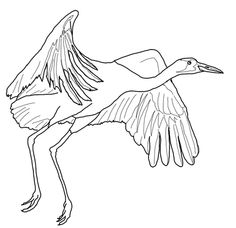 Whooping Crane Fly Coloring Page From Cranes Category Select 28264 Printable Crafts Of Cartoons Nature Animals Bible And Many More