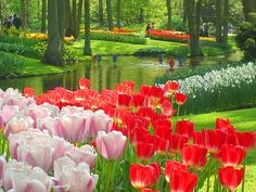 Keukenhof Gardens, Lisse, The Netherlands (I'll be going to visit this place when I go to Holland next month to visit my boyfriend.)