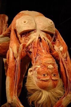 plastination    Maybe why I never took anatomy.  Like bodies with skin.