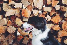dog with logs // via Seek + Scout