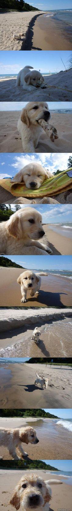 Cute_Little_Puppy_Beach Pero que bebé