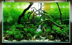 ADA 60P Forest stream