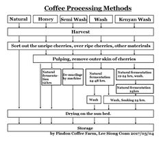 Coffee processing methods presented by Pindon Coffee Farm.