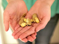 Blessed St. Joseph's fava beans sent by Charles Capdepon to Caroline Gerdes. St Joseph's Day is March 19.
