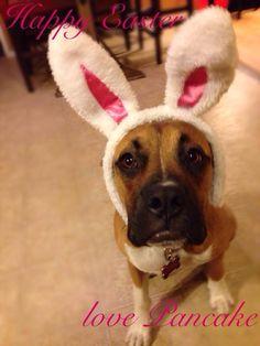 Pancake Easter bunny