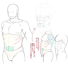 Muscular build art refrence