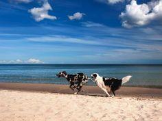 Uta Naumann: Spielende Hunde am Strand - Leinwandbild auf Keilrahmen