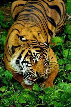 Crouching Tiger, Hidden Ivy