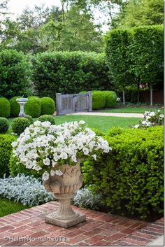 plantings & privacy