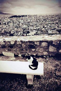 Cat | Athens Greece