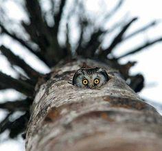 Peek a boo ! Plus