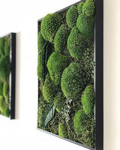 Asparagus, Vegetables, Pictures, Photos, Studs, Vegetable Recipes, Photo Illustration, Veggie Food, Veggies