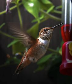 ...the hummingbirds are back...