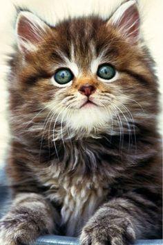 So cute it almost looks like a stuffed animal.