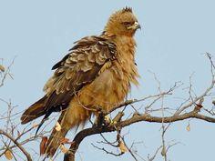 Interview Island Wildlife Sanctuary in Andaman and Nicobar, India