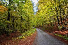 Con el otoño en su apogeo, es el momento ideal para visitar los bosques. La mejor época suele ser a finales de octubre e inicios de noviembre cuando los hayedos, castañares, robledales y bosques de ribera muestran sus más ricos matices que sólo se pueden disfrutar en un sosegado paseo respirando su intenso aroma y …