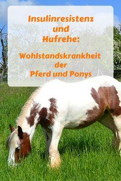 Hat Dein Pferd oder Dein Pony diese Symptome? Übergewicht, geht nicht richtig vorwärts, hat empfindliche Hufe,atmet schwer, ist immer mal nicht ganz fit: Vielleicht hat es ja das equine metabolische Syndrom und ist kurz davor, eine Hufrehe zu bekommen. Informationen findest Du auf Pferd und Reiter #Pferde #Reiten
