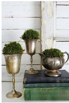 Put moss in antique tea pot