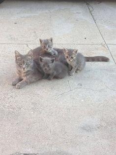 the family portrait :)