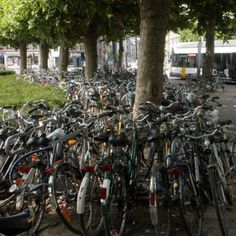 bikes & trees (in Ghent)