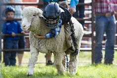 The State Mutton Bustin' Championship continued Wednesday night at the Central…