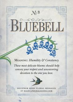 We love the language of flowers! Plant some bluebells this spring and share them with a friend to show your appreciation for their humility and constancy. Blue Bell Flowers, Dark Flowers, Flower Meanings, Symbols And Meanings, Language Of Flowers, Flower Quotes, Botanical Flowers, Humility, Book Of Shadows