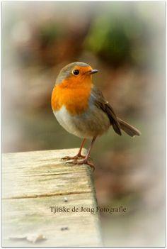 Thuis bij Tjits: Onze vogelvriendjes...