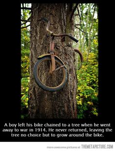 The tree is still waiting…