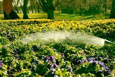 #Frühling an der #LUDWIGGALERIE im #Kaisergarten. Heute wurde die ersten #Blumen gepflanzt. #springtime #flowers © LUDWIGGALERIE