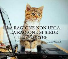 Il gatto ha ragione ed è saggio