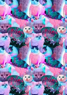 Isn't it illegal to give your cat LSD?
