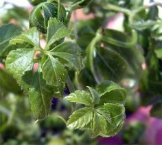 Medicinal Herbs, Kraut, Plant Leaves, Food, Green, Plant, Essen, Meals, Yemek