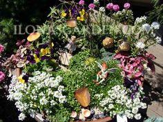 fairy garden ideas and mini plant help Fairy Garden Plants, Mini Fairy Garden, Garden Terrarium, Fairy Garden Houses, Gnome Garden, Garden Art, Garden Design, Fairy Gardening, Gardening Tips