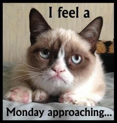 Tard the Grumpy Cat | Tard the Grumpy Cat! | Grumpy Cat, I