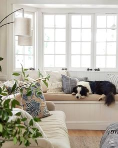 Neutral decor in traditional home with bay window seat. VJ / shiplap walls in Dulux Natural white with gloss trims in Lexicon. Dulux Natural White, Office Waiting Room Chairs, Front Rooms, Ship Lap Walls, Paint Schemes, Bay Window, Stripes Design, Traditional House, White Walls