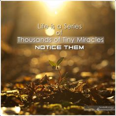 Life is a series of thousands of tiny miracles. NOTICE THEM // Quotes Mantra #quotes #motivation #inspiration