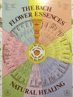 bach flower wheel - Google Search Chestnut Bud, Emotional Healing, Clematis, Helping Others, Freedom, Remedies, Google Search, Learning, Flowers