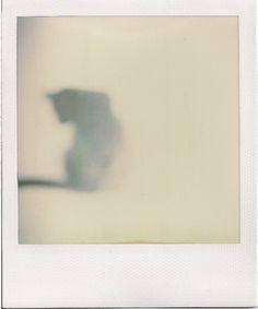 Polaroid of black cat