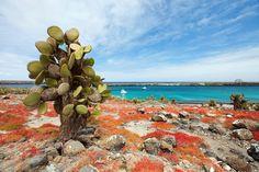 Ultiem faunaparadijs: De Galapagos eilanden