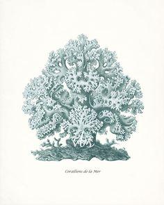 Coastal Decor Sea Coral Art Print E. Haeckel Natural History Fantasy Sea Coral Wall Decor No. 1 8x10 sea glass