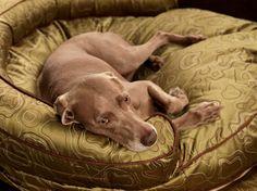 fuchs & fjonka - william wegman dog bed