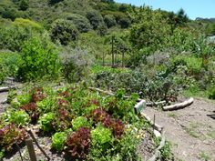 Permaculture is a system of ecological design in which the focus is on designing human settlements that have the stability, productivity, and resilience of a natural ecosystem.