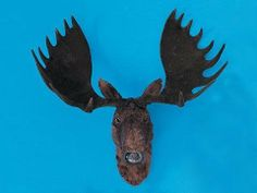 X-Large Head Wall Hanging Moose Elk Rare Collector Figure Lifework New by FAK. Save 39 Off!. $73.99. This gorgeous X-Large Head Wall Hanging Moose Elk Rare Collector Figure Lifework New has the finest details and highest quality you will find anywhere! X-Large Head Wall Hanging Moose Elk Rare Collector Figure Lifework New is truly remarkable.X-Large Head Wall Hanging Moose Elk Rare Collector Figure Lifework New Details:Condition: Brand NewItem SKU: SS-F-MS977Dimensions: H: 27 x L: 29...