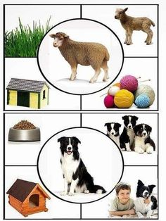 Video of farm animals photos with the sounds they make Animal Activities, Preschool Learning Activities, Toddler Activities, Preschool Activities, Kids Learning, Farm Animals Preschool, Farm Theme, Montessori Toddler, Montessori Materials