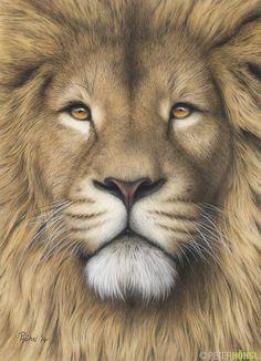 Best Ideas For Tattoo Lion Color Pencil Drawings Animal Drawings, Pencil Drawings, Art Drawings, Pencil Sketching, Realistic Drawings, Lion Drawing, Painting & Drawing, Drawing Faces, Drawing Tips