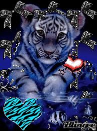 Bengal Cats - Cat's Nine Lives Big Cats Art, Cat Art, Tiger Pictures, Animal Pictures, Cute Baby Animals, Animals And Pets, Wild Animal Wallpaper, Tiger Wallpaper, Cute Tigers