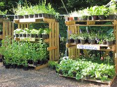 #recycled #pallets #garden