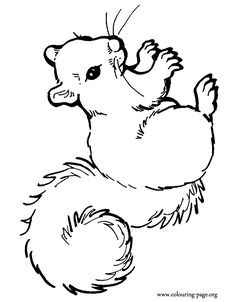 A beautiful squirrel coloring page
