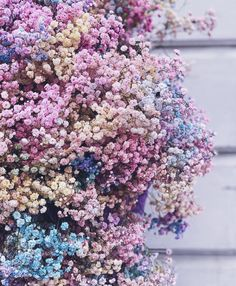 Cascade of colours for a colourful life Fresh Flowers, Dried Flowers, Beautiful Flowers, Beautiful Pictures, Bloom Where Youre Planted, Flower Shower, Nature Plants, Flower Aesthetic, Pastel Wallpaper