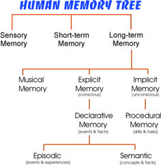 Image result for short term memory Spaced Repetition, Human Memory, Memory Tree, Short Term Memory, Facts, Memories, Image, Remember This, Knowledge